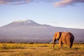 10 Days Kenya Wildlife Safaris
